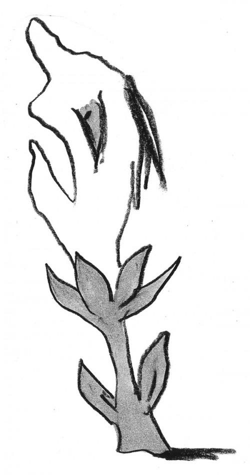 Woes Garden Flower